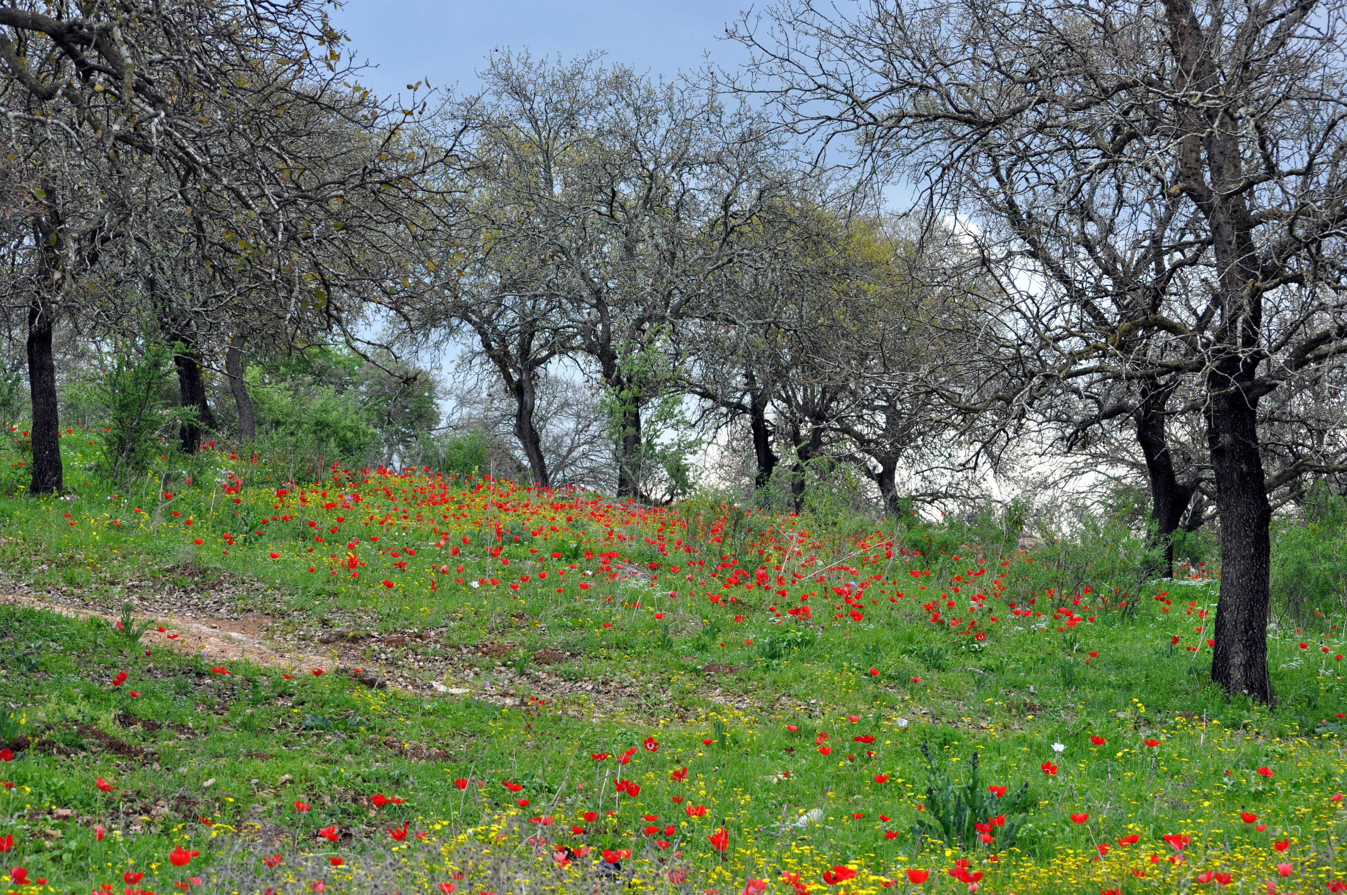 שמורת טבע אלוני אבא – רשות הטבע והגנים
