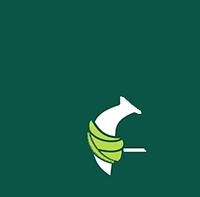 אייקון צב ים פצוע- תחבושת ירוקה